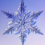 -2,-15 C'lerde oluşan kar kristali